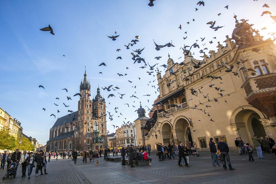 Poland free study